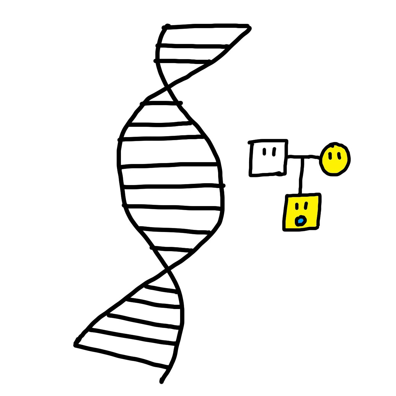 ワキガ優性遺伝